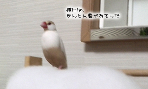 文悟空_9