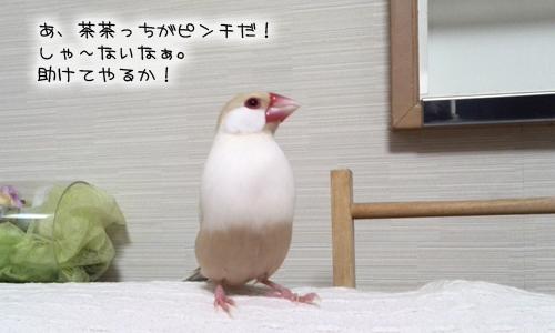 文悟空_14