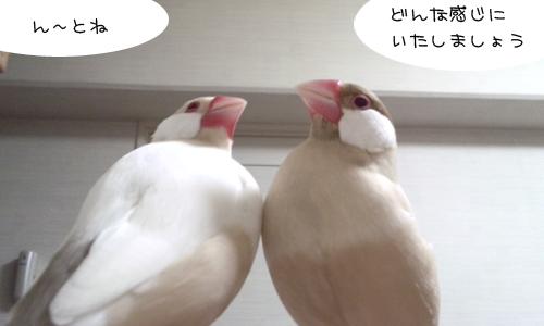 美容師ちゃちゃ_3