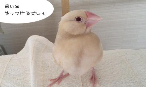 がんばるピノ_2