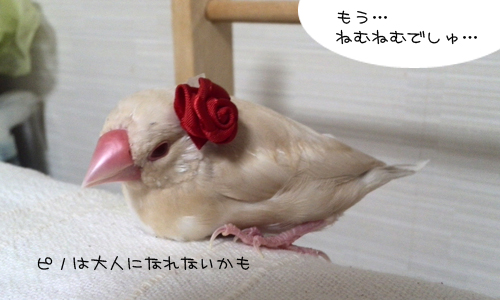 おしゃれのレッスン_9
