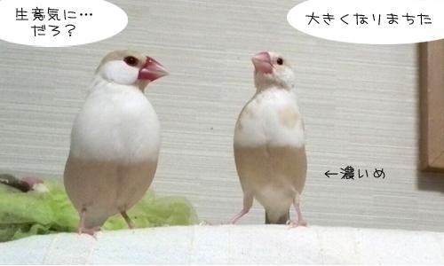 だ~れだ?_2