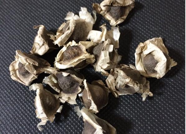 モリンガの種