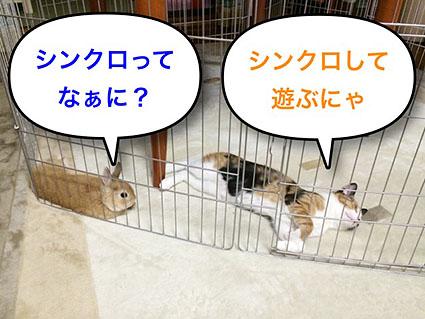 猫とウサのシンクロ1