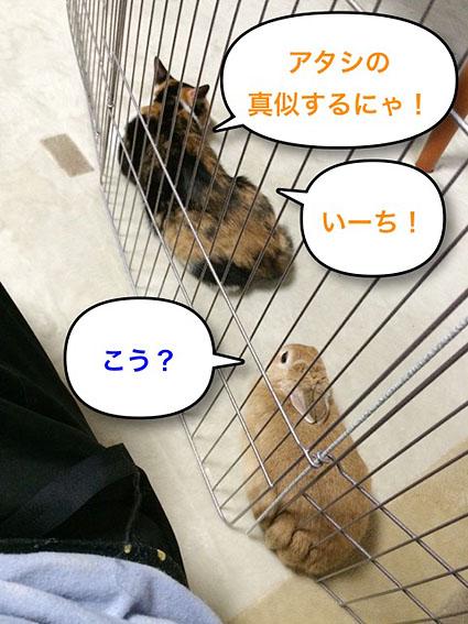 猫とウサのシンクロ2