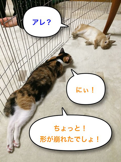 猫とウサのシンクロ3