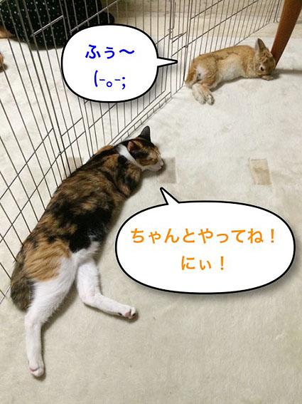 猫とウサのシンクロ4