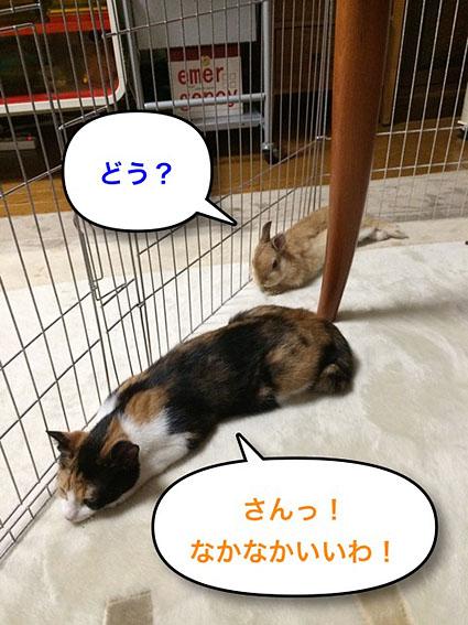 猫とウサのシンクロ5