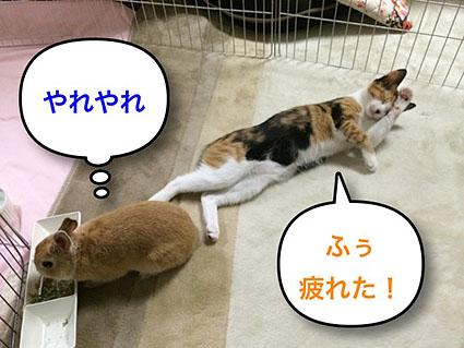 猫とウサのシンクロ6