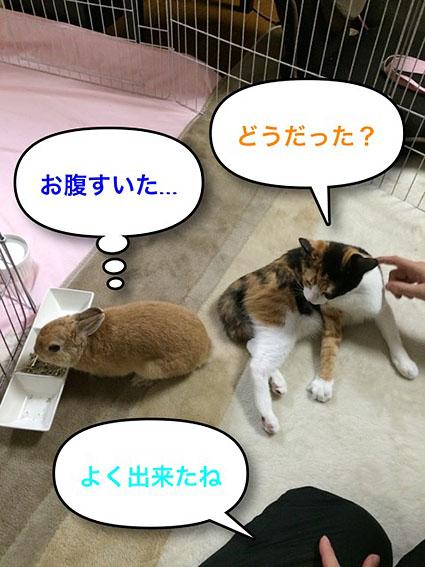 猫とウサのシンクロ7