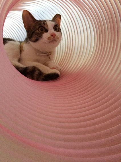 猫胃腸炎6