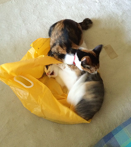 猫胃腸炎8
