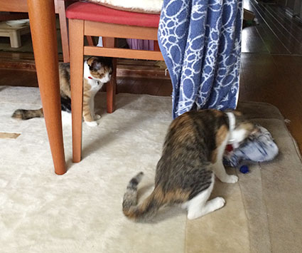 猫胃腸炎9