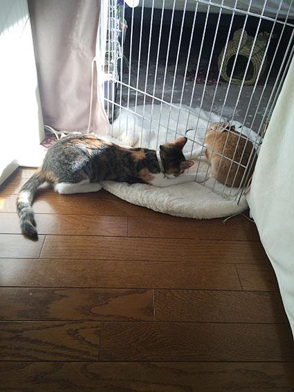 猫胃腸炎10