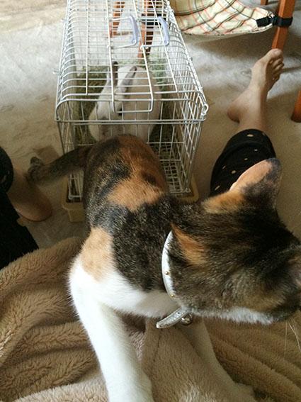 猫胃腸炎13