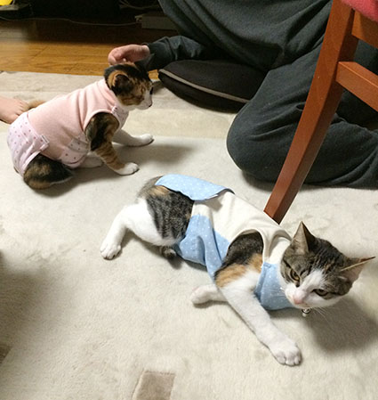 猫胃腸炎17