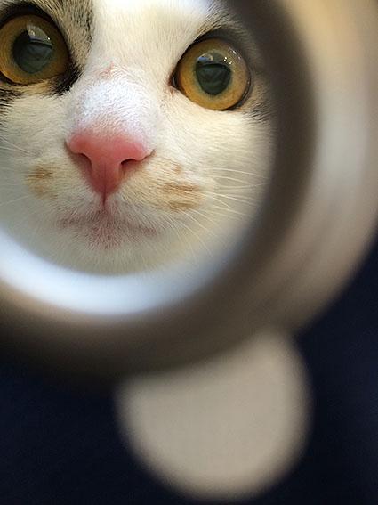 猫胃腸炎20