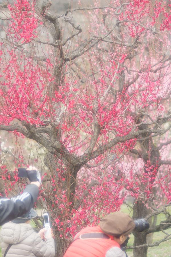 20150315-1_大阪城梅林_3