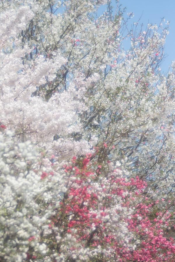 20150506_SAKURAMOMO_2