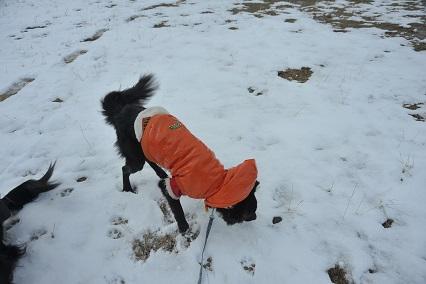 雪をお味見してみました。