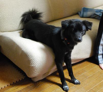 ソファに腰掛けるのが得意です。