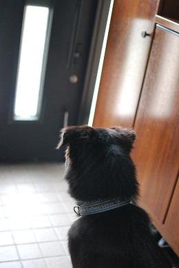 忠犬ゲッツ
