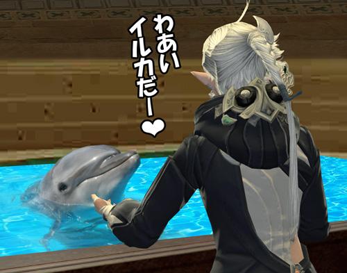 わあい、イルカだ♪
