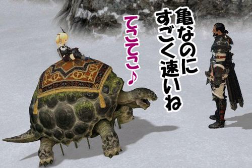 亀なのにすごく速いね