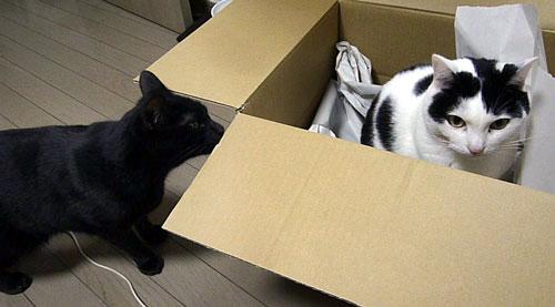 黒猫と箱の中のぶちネコ