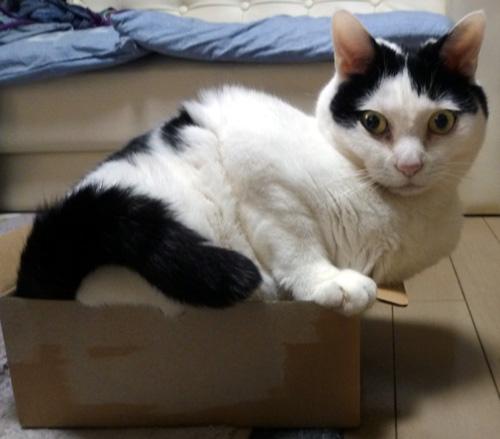 ちっぷ箱の中の猫
