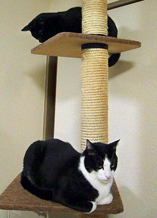 猫タワー上下に座る