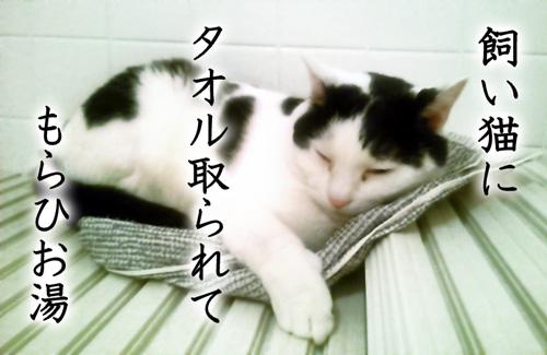 飼い猫に タオル取られて もらひお湯