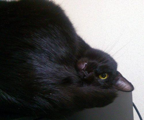 黒猫が見てる