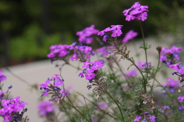 150523-flower-01.jpg