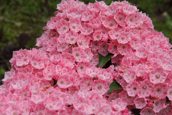 150523-flower-02.jpg