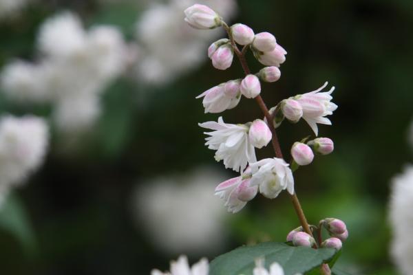 150523-flower-03.jpg