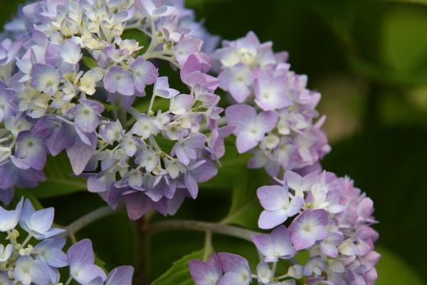 150523-flower-06.jpg