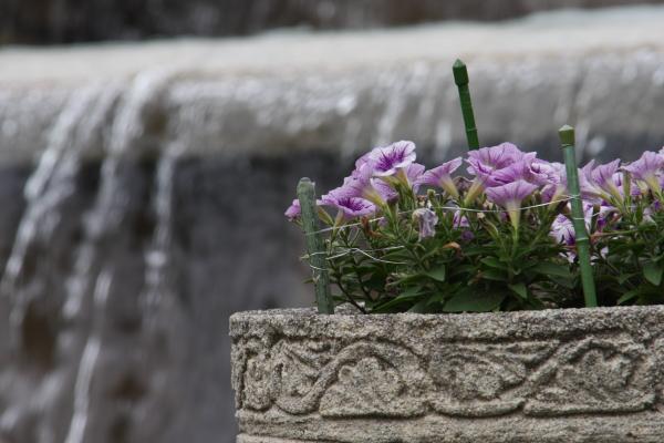 150523-flower-07.jpg