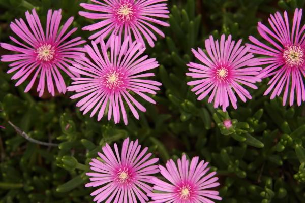 150523-flower-08.jpg