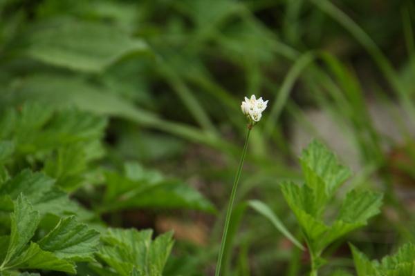150523-flower-09.jpg