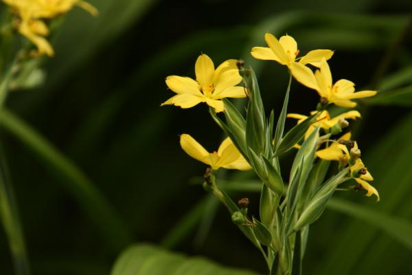 150523-flower-10.jpg
