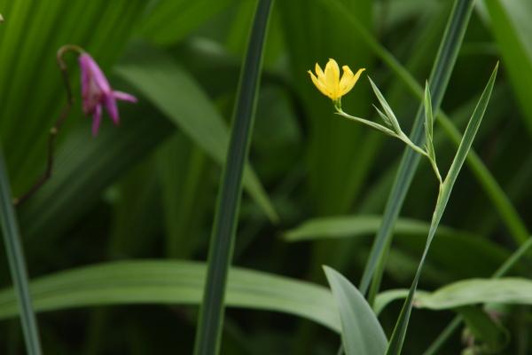 150523-flower-11.jpg