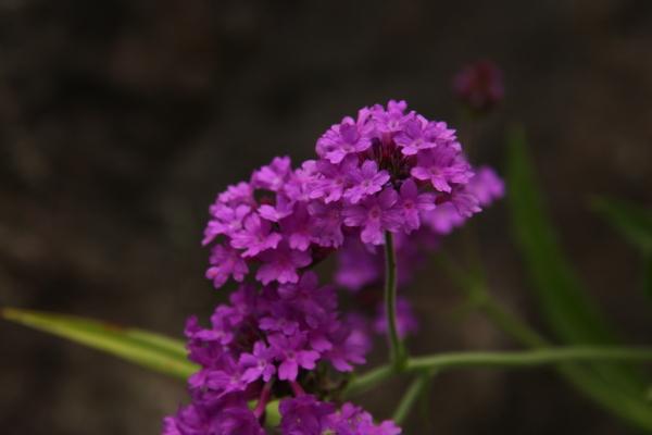 150523-flower-17.jpg