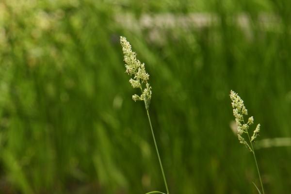 150523-flower-23.jpg