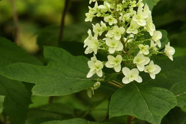 150523-flower-26.jpg