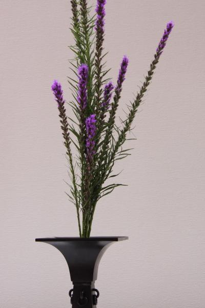 150530-flower-15.jpg