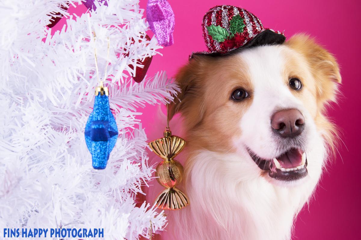 メリーメリークリスマス!