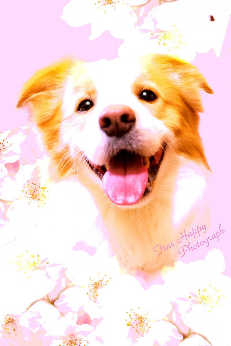 桜待月_convert_20150218221835