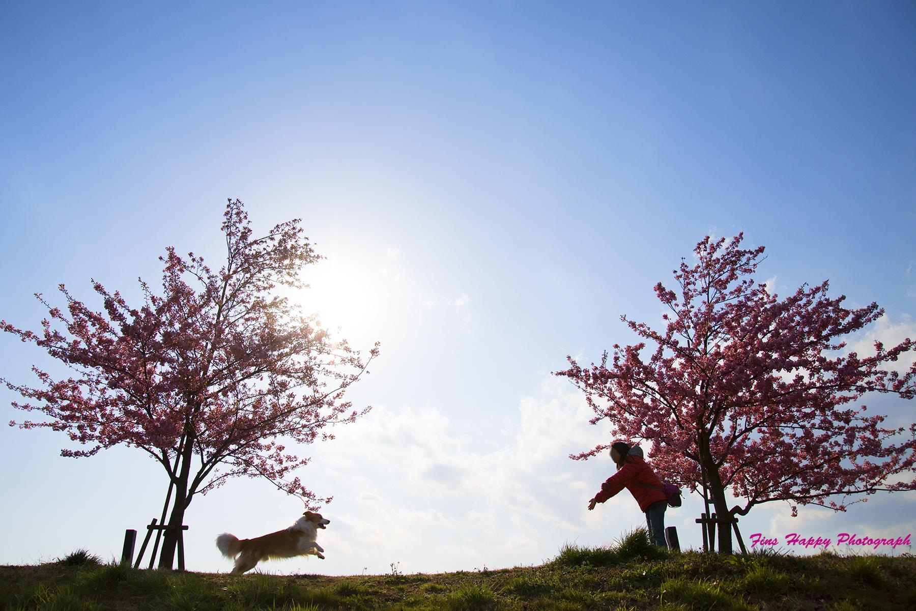 桜を背景に家族写真を無料でお撮りしますよ~企画です!