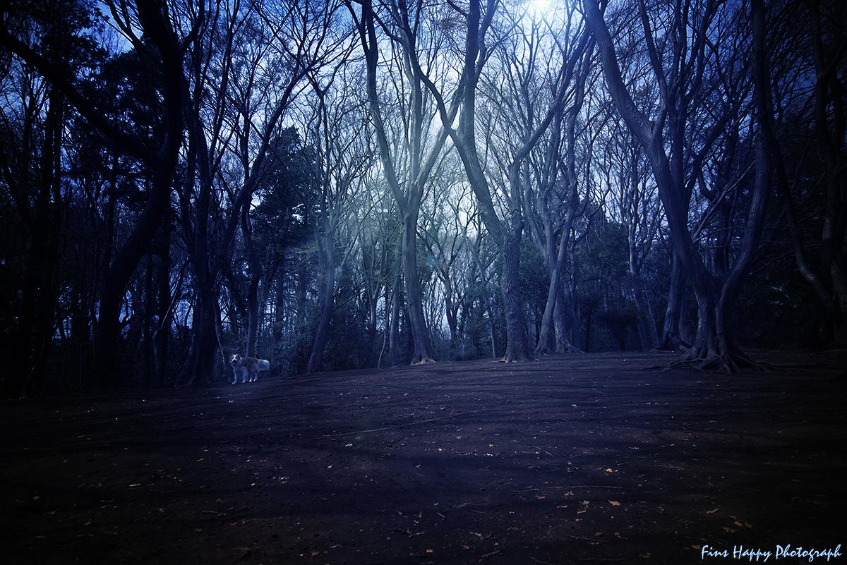森へのイザナイ